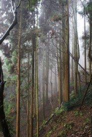 kleszcze - las